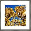 Fall Foliage Near Ruidoso Nm Framed Print