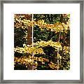 Fall Forest 1 Framed Print