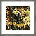 Fall Forest 3 Framed Print