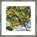 Fall In Woods Framed Print