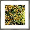 Fall Leaves In The Smokies Framed Print
