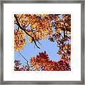 Fall Oak Leaves Up Above Framed Print