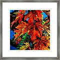 Fall Reds Framed Print