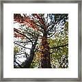 Fall Tall Framed Print