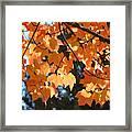 Fall Tree Art Prints Orange Autumn Leaves Baslee Troutman Framed Print
