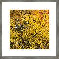 Fall Tree Leaves 2 Framed Print