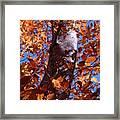 Fall Tree Framed Print