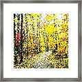 Fallen Leaves Of Autumn Framed Print