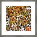 Falling Into Fall Framed Print