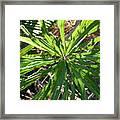 Fan Of Leaves Framed Print