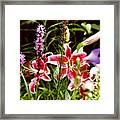 Fancy Lilies In Garden Framed Print