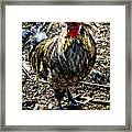 Fat Tuesday - Mardi Gras Chicken Framed Print