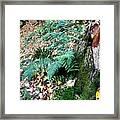Fern And Moss I Framed Print
