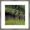 Fern-palm Abtract Framed Print