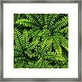 Ferns After The Rain Framed Print