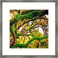 Ferns On Florida Oaks Framed Print