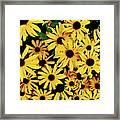Field Of Black-eyed Susans Framed Print