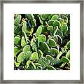 Field Of Cactus Paddles Framed Print