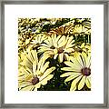 Field Of Daisies Landscape Floral Art Prints Daisy Baslee Troutman Framed Print