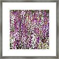 Field Of Multi-colored Flowers Framed Print