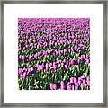Field Of Purple Flowers Framed Print