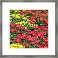Field Of Red And Yellow Flowers Framed Print