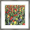 Fields Of Beauty 64 Framed Print