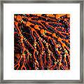 Fiji Red Seafan Framed Print