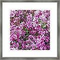 Fine Wine Cafe Apple Blossoms Framed Print