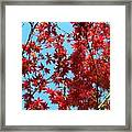 Fire Tree II Framed Print