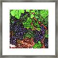 First Came The Grape Framed Print