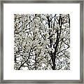 First Spring Blossom Framed Print