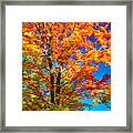 Flaming Maple - Paint Framed Print