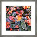 Flamingo Flower Bed Framed Print