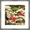 Floor Of The Forest In Fall Framed Print