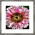 Floral Red And White Painting  Framed Print