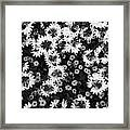 Floral Texture In Black And White Framed Print