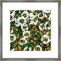 Floral Texture In The Summer Framed Print