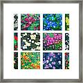Floralies Framed Print