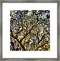 Golden Moss Framed Print