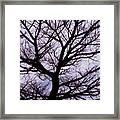 Floss Silk Tree Framed Print