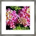 Flower 23f, Ny, 16 Framed Print