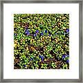 Flower Carpet. Sochi Arboretum. Framed Print