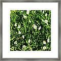 Flower Kissed Fields Framed Print
