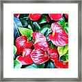 Flowering Plant Framed Print