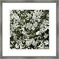 Flowers 16 Framed Print