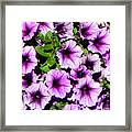 Flowers Alaska July  Framed Print