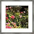 Flowers In Garden In Venice Framed Print