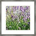 Flowers In The Field  Framed Print