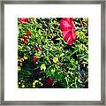 Flowers Of Bethany Beach - Hibiscus And Black-eyed Susams Framed Print